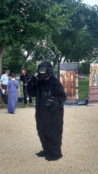 gorilla_smithsonian